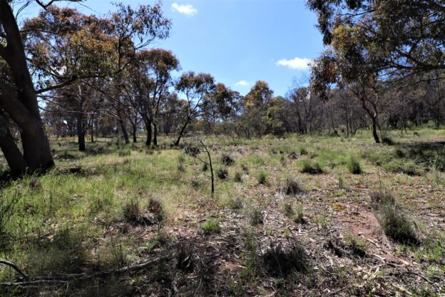 Land for sale in Bywong NSW